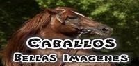 caballosimagenesmuybellas
